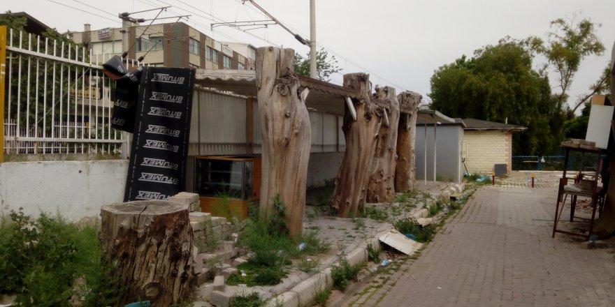 ÇİĞLİ'DE AĞAÇ KATLİAMI.BELEDİYEYE BAŞKANININ KOLTUĞUNA 100 METRE