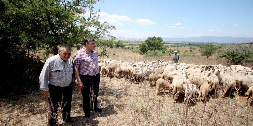 CHP İZMİR MİLLETVEKİLİ SINDIR VEBA SALGININI MECLİS'E TAŞIDI