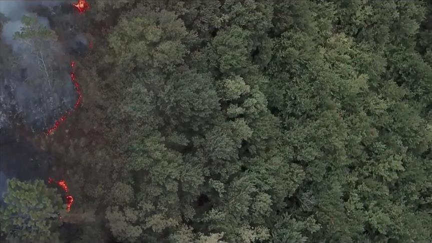 İzmir'de doğaya 5 bin ağaç kazandırılacak!